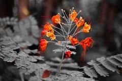 Όμορφα λουλούδια με το μαύρο θολωμένο υπόβαθρο στοκ εικόνες