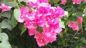 Όμορφα λουλούδια με το φωτεινό αεράκι απόθεμα βίντεο
