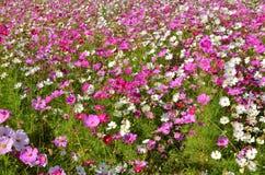 όμορφα λουλούδια πεδίων κόσμου στοκ φωτογραφίες