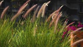 Όμορφα λουλούδια που ανθίζουν στον κήπο στον ήλιο με το σκοτεινό υπόβαθρο θαμπάδων απόθεμα βίντεο
