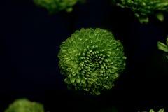 όμορφα λουλούδια πράσινα Στοκ Φωτογραφίες