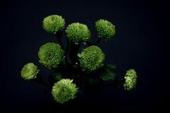 όμορφα λουλούδια πράσινα Στοκ φωτογραφία με δικαίωμα ελεύθερης χρήσης