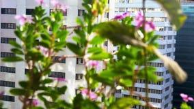 Όμορφα λουλούδια σε ένα μπαλκόνι στην πόλη - στις αρχές χαλαρώνοντας πρωινού απόθεμα βίντεο