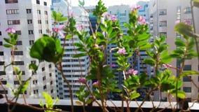 Όμορφα λουλούδια σε ένα μπαλκόνι απόθεμα βίντεο