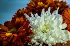 Όμορφα λουλούδια σε ένα μπλε υπόβαθρο στοκ φωτογραφίες