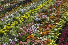 όμορφα λουλούδια σπορείων Στοκ Εικόνες