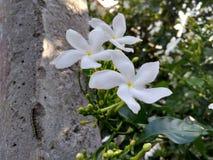Όμορφα λουλούδια στον εγχώριο κήπο Στοκ φωτογραφία με δικαίωμα ελεύθερης χρήσης