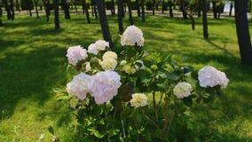 Όμορφα λουλούδια στο βοτανικό κήπο στη Γεωργία Batumi, πρασινάδα και φύση απόθεμα βίντεο