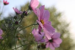 Όμορφα λουλούδια στο χωριό στιλβωτικής ουσίας στοκ εικόνες