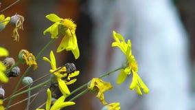 Όμορφα λουλούδια χλωρίδας ανθών στη μητέρα φύση φιλμ μικρού μήκους