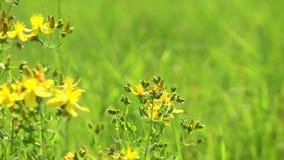 Όμορφα λουλούδια χλωρίδας ανθών στη μητέρα φύση απόθεμα βίντεο
