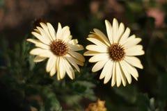 όμορφα λουλούδια Στοκ φωτογραφία με δικαίωμα ελεύθερης χρήσης