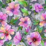 Όμορφα λουλούδια lavatera με τα πράσινα φύλλα στο γκρίζο κλίμα floral πρότυπο άνευ ραφής υψηλό watercolor ποιοτικής ανίχνευσης ζω διανυσματική απεικόνιση