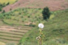 Όμορφα λουλούδι και τοπίο του υποβάθρου βουνών στοκ εικόνες