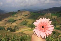 Όμορφα λουλούδι και τοπίο του υποβάθρου βουνών στοκ εικόνα