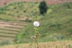 Όμορφα λουλούδι και τοπίο του υποβάθρου βουνών Στοκ εικόνα με δικαίωμα ελεύθερης χρήσης