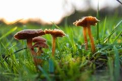 Όμορφα μανιτάρια που διακοσμούν τη φύση Στοκ εικόνα με δικαίωμα ελεύθερης χρήσης