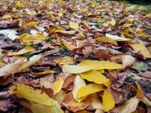 Όμορφα μειωμένα κίτρινα και καφετιά φύλλα ως φυσικό υπόβαθρο φθινοπώρου στοκ φωτογραφίες με δικαίωμα ελεύθερης χρήσης