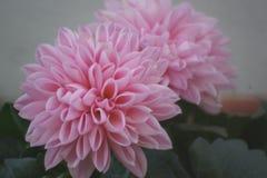 Όμορφα μικρά λουλούδια στα συγκλονιστικά χρώματα Η φύση είναι θαυμάσια - Μπροστινή άποψη - οριζόντια θέα άποψης Στοκ εικόνες με δικαίωμα ελεύθερης χρήσης