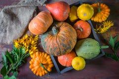 Όμορφα μικτά χρώματα των ώριμων κολοκυθών που βρίσκονται στη χλόη στην πλοκή καλλιέργειας στην ημέρα της ημέρας των ευχαριστιών Στοκ Φωτογραφίες