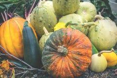 Όμορφα μικτά χρώματα των ώριμων κολοκυθών που βρίσκονται στη χλόη στην πλοκή καλλιέργειας στην ημέρα της ημέρας των ευχαριστιών Στοκ φωτογραφίες με δικαίωμα ελεύθερης χρήσης
