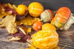 Όμορφα μούρα Viburnum το φθινόπωρο Στοκ Εικόνες