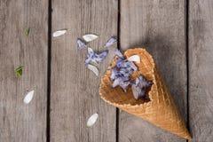 Όμορφα μπλε πέταλα στον κώνο γκοφρετών στο ξύλινο υπόβαθρο Στοκ Φωτογραφίες