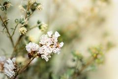 Όμορφα ξηρά λουλούδια στη φωτεινή θαμπάδα υποβάθρου Στοκ εικόνες με δικαίωμα ελεύθερης χρήσης