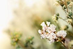Όμορφα ξηρά λουλούδια στη φωτεινή θαμπάδα υποβάθρου Στοκ Φωτογραφία