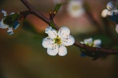 Όμορφα ξυπνώντας τοπίο και δέντρα την άνοιξη Στοκ φωτογραφία με δικαίωμα ελεύθερης χρήσης