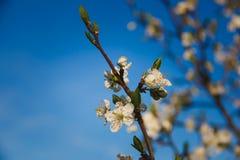 Όμορφα ξυπνώντας τοπίο και δέντρα την άνοιξη Στοκ Εικόνα