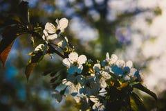 Όμορφα ξυπνώντας τοπίο και δέντρα την άνοιξη Στοκ εικόνες με δικαίωμα ελεύθερης χρήσης