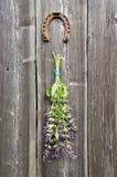 Όμορφα λογικά (officinalis Salvia) ιατρικά δέσμη και πέταλο εγκαταστάσεων στον τοίχο Στοκ Φωτογραφία