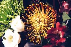 Όμορφα ονειροπόλα μαγικά λουλούδια νεράιδων Στοκ Εικόνα
