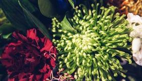 Όμορφα ονειροπόλα μαγικά λουλούδια νεράιδων Στοκ φωτογραφίες με δικαίωμα ελεύθερης χρήσης