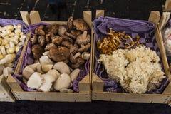 Όμορφα οργανικά αυξημένα μανιτάρια στην αγορά Στοκ Εικόνες