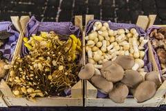 Όμορφα οργανικά αυξημένα μανιτάρια στην αγορά Στοκ εικόνες με δικαίωμα ελεύθερης χρήσης