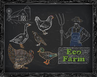 Όμορφα ορτύκια χήνων παπιών της Τουρκίας κοτόπουλου στο αγρόκτημα και αγρότης Στοκ Εικόνες