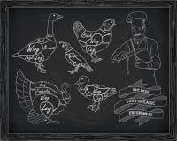 Όμορφα ορτύκια χήνων παπιών της Τουρκίας κοτόπουλου σχεδίου τέμνοντα με το CH Στοκ Φωτογραφία