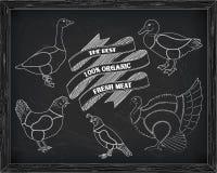 Όμορφα ορτύκια χήνων παπιών της Τουρκίας κοτόπουλου σχεδίου τέμνοντα Στοκ Εικόνες