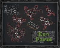 Όμορφα ορτύκια χήνων παπιών της Τουρκίας κοτόπουλου σχεδίου τέμνοντα Στοκ φωτογραφία με δικαίωμα ελεύθερης χρήσης