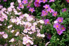 όμορφα λουλούδια λίγα Στοκ Φωτογραφία