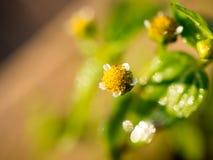 όμορφα λουλούδια λίγα Στοκ φωτογραφία με δικαίωμα ελεύθερης χρήσης