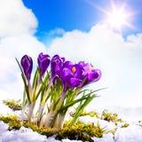 Όμορφα λουλούδια ανοίξεων τέχνης Στοκ Εικόνα