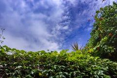 Όμορφα λουλούδια ενάντια στο μπλε ουρανό Στοκ φωτογραφίες με δικαίωμα ελεύθερης χρήσης