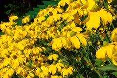όμορφα λουλούδια κίτρινα Στοκ Φωτογραφία