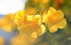 όμορφα λουλούδια κίτρινα Στοκ φωτογραφίες με δικαίωμα ελεύθερης χρήσης