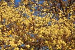 όμορφα λουλούδια κίτρινα Στοκ εικόνα με δικαίωμα ελεύθερης χρήσης