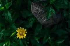 όμορφα λουλούδια κίτρινα Στοκ φωτογραφία με δικαίωμα ελεύθερης χρήσης