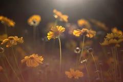 όμορφα λουλούδια κίτρινα Στοκ Εικόνες